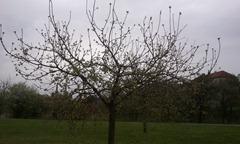 C360_2011-04-14 10-23-56_org