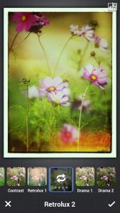 photos4 (1)