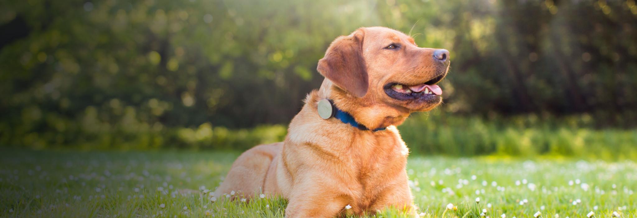 Whistle: sledujte aktivitu svého psa