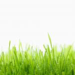 dewy_grass_hd1080p