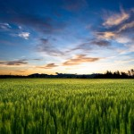 field_at_sunset_hd1080p