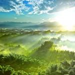 green_jungle_hd1080p