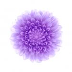 iClarified-iOS8-03-744x1392