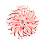 iClarified-iOS8-04-744x1392
