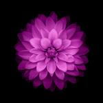 iClarified-iOS8-05-744x1392