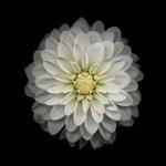 iClarified-iOS8-08-744x1392